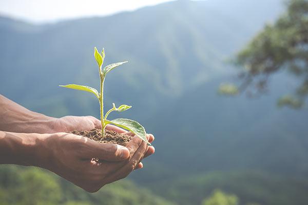 Productores, Distribuidores y Marcas comprometidas con la sostenibilidad y respetuosas con el medio ambiente